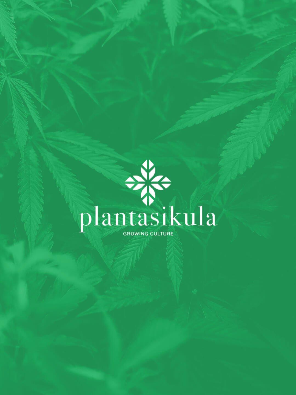 plantasikula